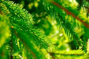 eco-friendly trees for green gifts