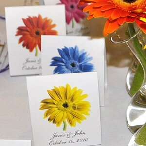 Gerber Daisy for Indoor Growing