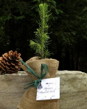 Tree Seedlings in Natural Burlap Favors